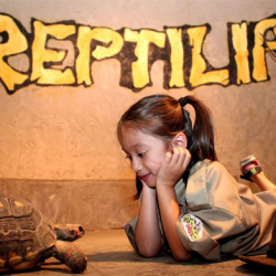 Feb 10: Reptilia – Virtual Education Program