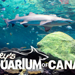 May 8: Ripley's Aquarium – Virtual Tour Experience