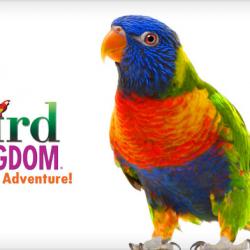 Apr 23: Bird Kingdom – Virtual Field Trip