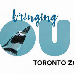 Mar 13: Toronto Zoo – Virtual Experience Program